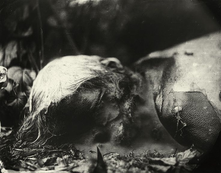"Sally Mann, Body Farm- ""There's a new prudery around death. We've moved it into hospital, behind screens, and no longer wear black markers to acknowledge its presence. It's become unmentionable."""