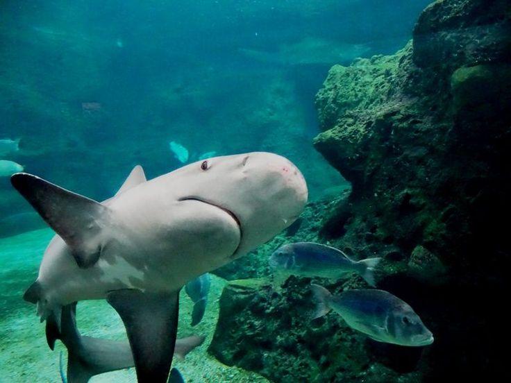 Shark at Cretaquarium