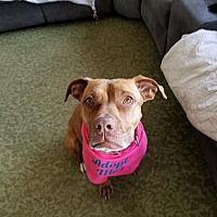 Adopt A Pet :: Lucia - New York, NY