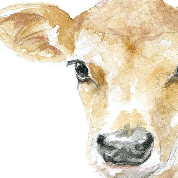 Jersey Cow Calf Watercolor Painting 5 X 7 Farmhouse Farm