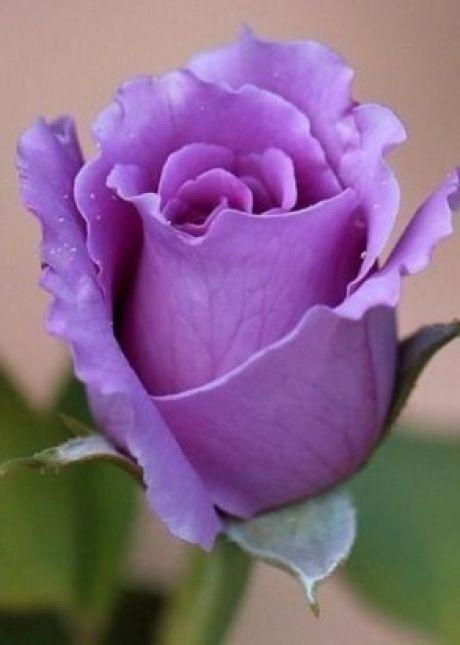 Цветы | Советы по выращиванию и красивые фото на Постиле