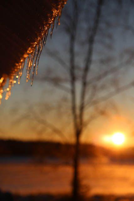 Jääpuikkoja aamuauringossa. // Icicles on a sunny morning.