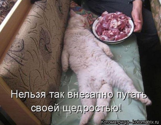 Братья наши меньшие-СУББОТНИЙ ПОЗИТИВ! / Болталка / Юмор