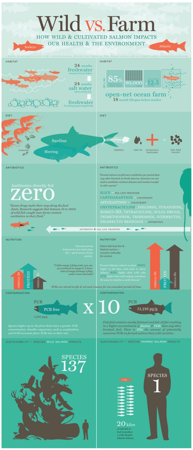 Salmon: Wild vs. Farm [infographic]  Today's infographic gives a really great over view of what goes into wild and farm bred salmon. While I'm aware that all food these days contain pesticides and chemicals, I am saddened to see that farm salmon does indeed contain chemicals.