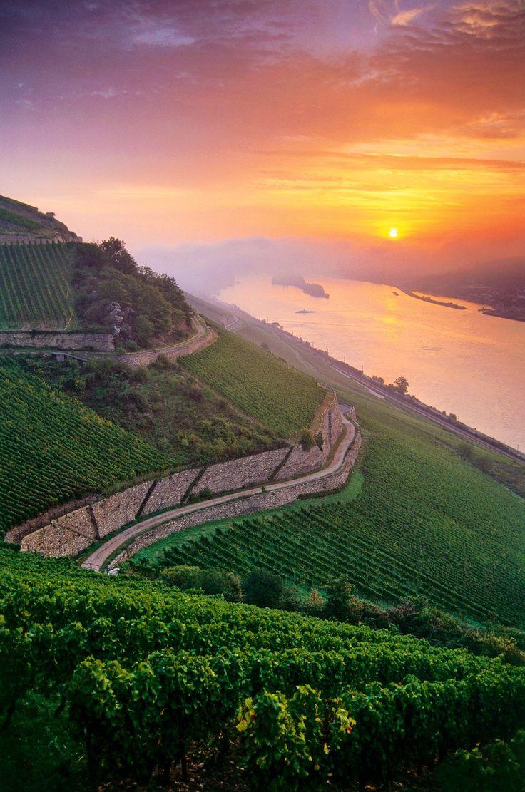 Rüdesheim, Rhine and Vineyards· National Geographic en español.