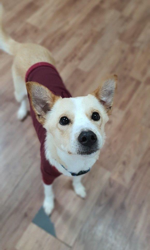Dogs For Adoption Near Toronto On Petfinder Dog Adoption Animal Projects Pet Adoption