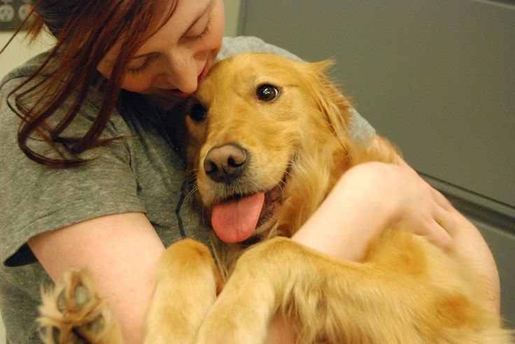 Kedvencünk minden helyzetben megvigasztal  Megérzi a kutyám, ha félek?  #kutya #dog #goldenretriever #love #szeretet #kutyabaráthelyek #kutyabarathelyek