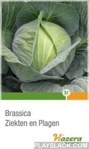 Brassica Diseases  Android App - playslack.com , The Hazera brassica disease app is a practical instrument for growers to recognise diseases and malfunctions in brassica crops (headed cabbage, cauliflower, broccoli, Brussels sprouts). It features detailed explanations, pictures and recommendations on bacterial, soil-borne, virus, foliar and storage diseases, insects and disorders. It also offers company information and contact persons worldwide.