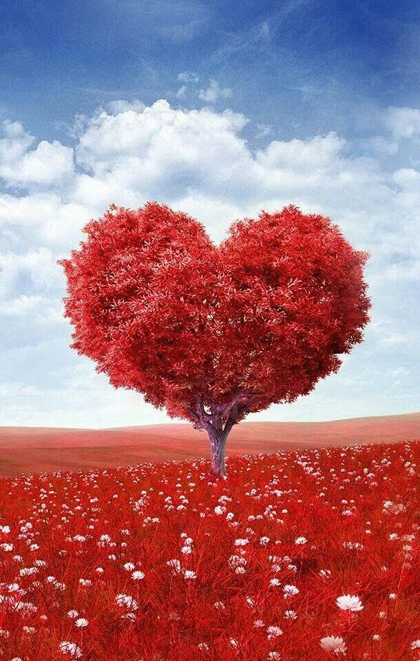 Love tree loves you