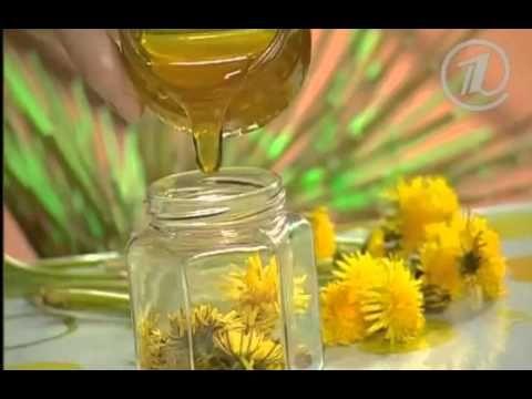 Одуванчик: лечебные свойства и противопоказания, рецепты, фото