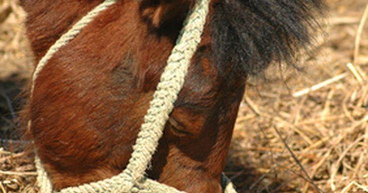 Causas de tosse e coriza em cavalos. Ao diagnosticar a tosse de um cavalo e nariz escorrendo, os veterinários procuram geralmente por três doenças. Doença pulmonar obstrutiva crônica, pleuropneumonia bacteriana e vírus da herpes equina, todas essas que podem causar desconforto respiratório e, sem análise veterinária adequada, podem ser facilmente confundidos um com um outro, escreve ...