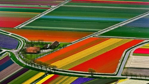 Tulip fields, Netherlands, by Tom Seany