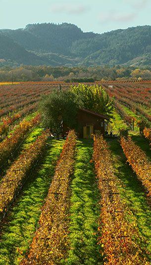 Sebastiani Wine Tours