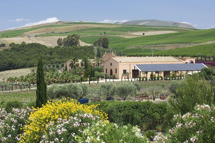 Итальянское вино. Винодельни Сицилии. Donnafugata.
