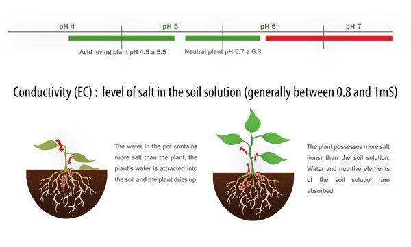 10 best PLANT NUTRITION images on Pinterest Plants