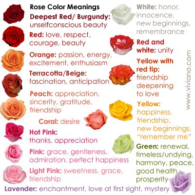 Common Rose Color Meanings For Deepest Red Burgundy Red