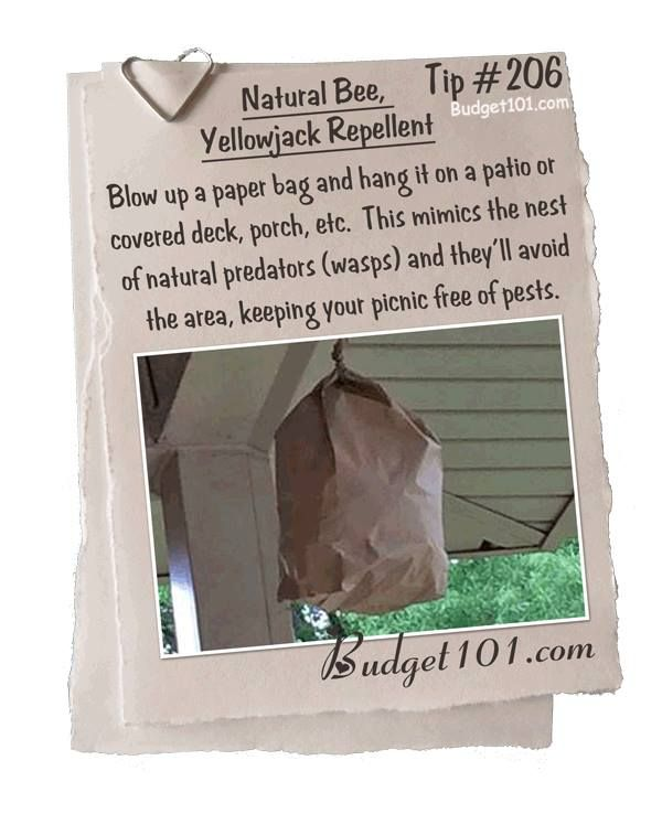 how to get rid of wood bees around your house