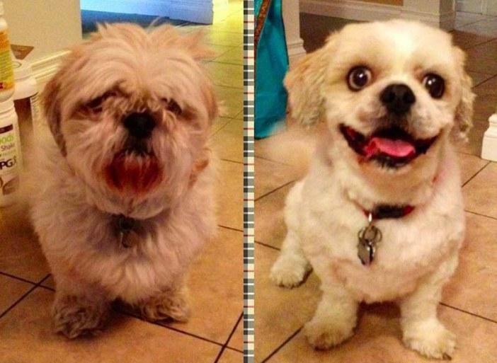 Perros antes y después de ir a la peluquería
