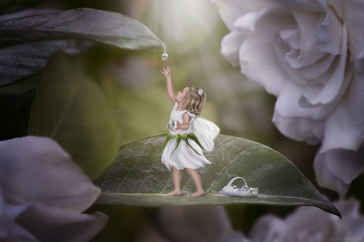 'Chasing Dew Drops' by Carley Shelly Photography                Fairy girl catching dewdrops.Fairy Art. Creative Composite. Fine Art Digital Artist.