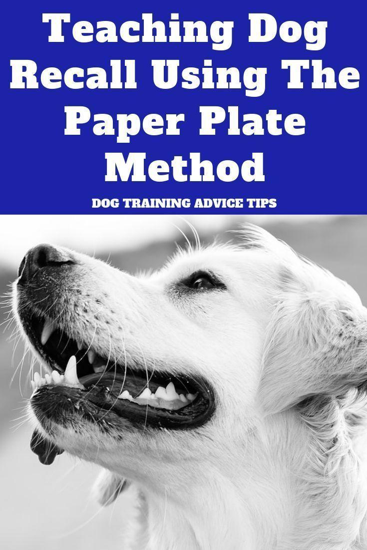 Teaching Dog Recall Using The Paper Plate Method Dog Training