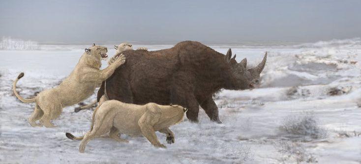 A pride of Eurasian cave lions(Panthera leo spelaea) vs. woolly rhino(Coelodonta antiquitatis).. by Leogon.deviantart.com on @deviantART