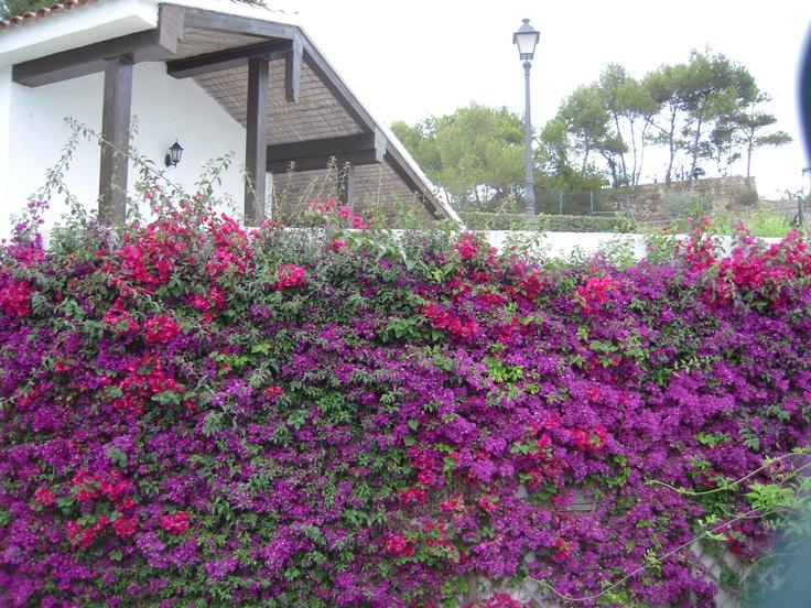 Hermosa enredadera para cubrir muros casa de campo - Muros de jardin ...
