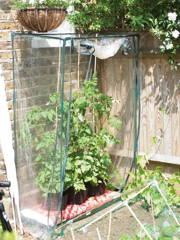 large plastic garment bags and be used as early spring greenhouse this one shields tomatoes from cold nights - tomatoes DON'T like the cold!