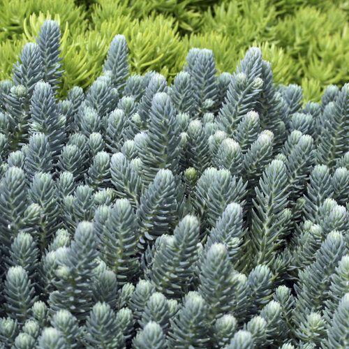 1000+ Images About Amazing Succulents
