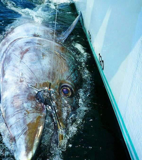 how to catch yellowfin tuna in florida