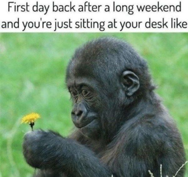 24 Work Memes To Remind You That We Re All A Little Dead Inside Funny Monday Memes Weekend Humor Monday Morning Humor