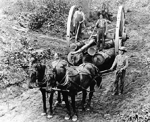 ca 1900 - Logging in the United States | Wood Splitters Direct