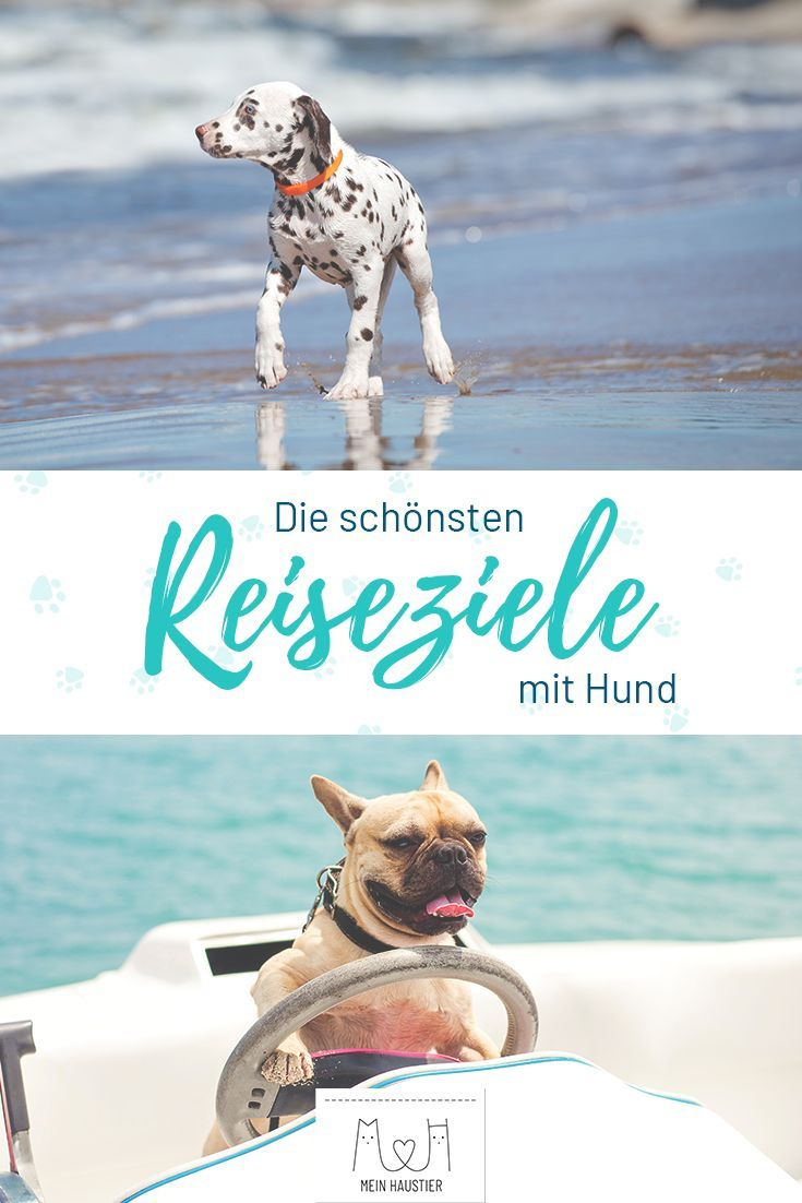 Reiseziele Mit Hund Die Schonsten Orte Fur Euren Urlaub Hund Reisen Hunde Urlaub Mit Hund