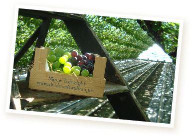 Druivenkistje