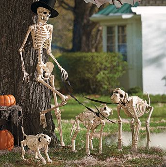 halloween skeleton and dog