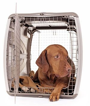 Crate Train Older Adopted Dog