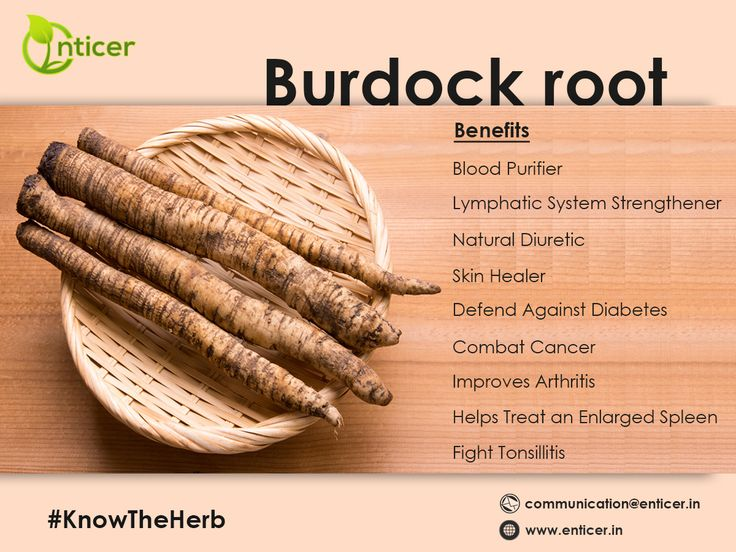 #knowtheherb #burdockroot is blood purifier, lymphatic system strengthener, natural diuretic and skin healer. It also defends against diabetes, combats cancer, improves arthritis, helps treat an enlarged spleen and fights tonsillitis. #enticer #enticergroup