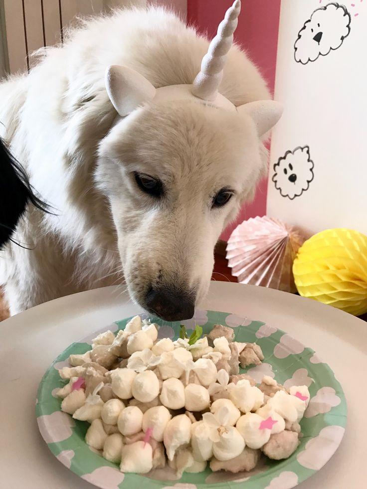 happy Birthday White Mountain #petchef #dogparty #unicorndogparty #kikipelosi #petpartyplanner