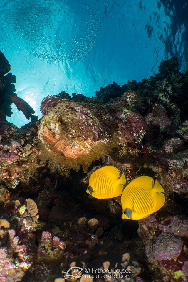 """Présentation de l'itinéraire """"Réserves australes"""" testé lors de la croisière bio, vers les plus beaux sites de plongée en Mer Rouge, au sud de l'Egypte"""