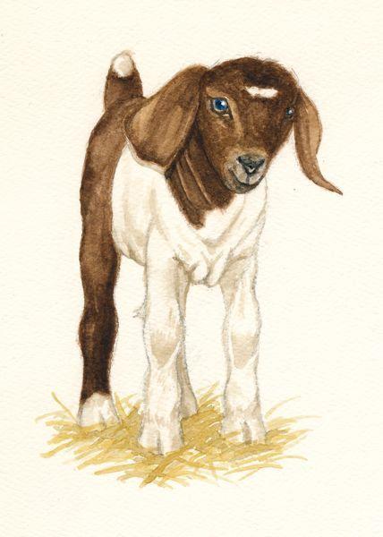 79 best images about Boer Goats - Grandkids 4 H on Pinterest