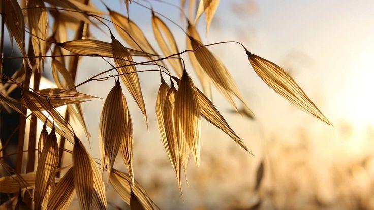Voedingsvezels zijn belangrijk, maar waarom eigenlijk? Wat is vezelrijke voeding en wat voor nut heeft het?  Link: https://www.fitness-tips.nl/voeding/voedingstheorie/vezelrijke-voeding-belangrijk