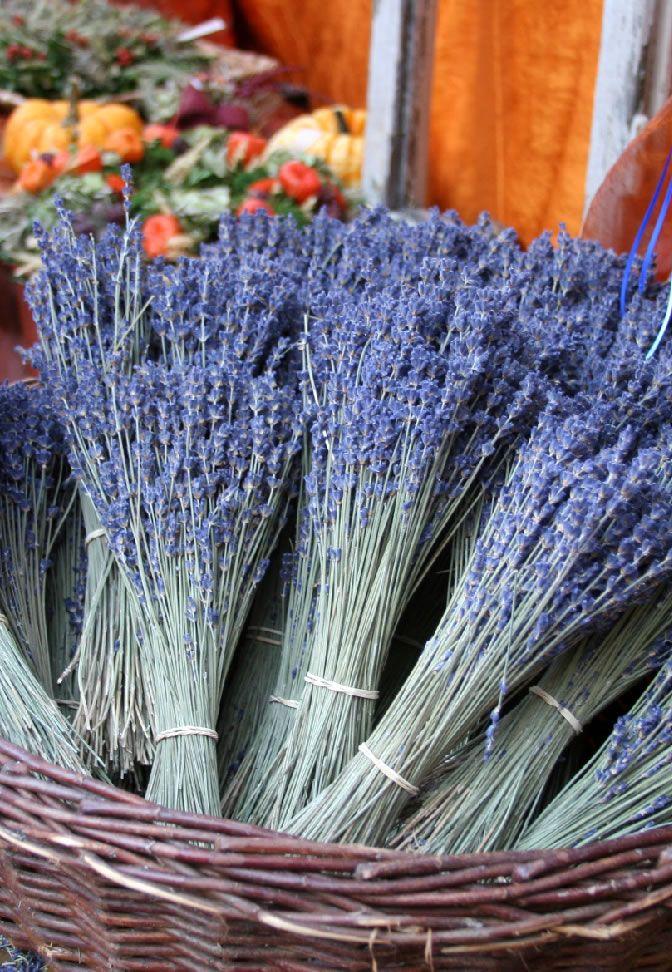 die besten 25 lavendel vermehren ideen auf pinterest lavendel pflanzenpflege garten lavendel. Black Bedroom Furniture Sets. Home Design Ideas
