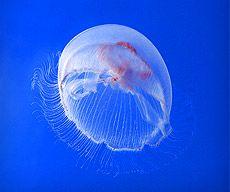 Nausicaa aquarium - Boulogne-sur-Mer