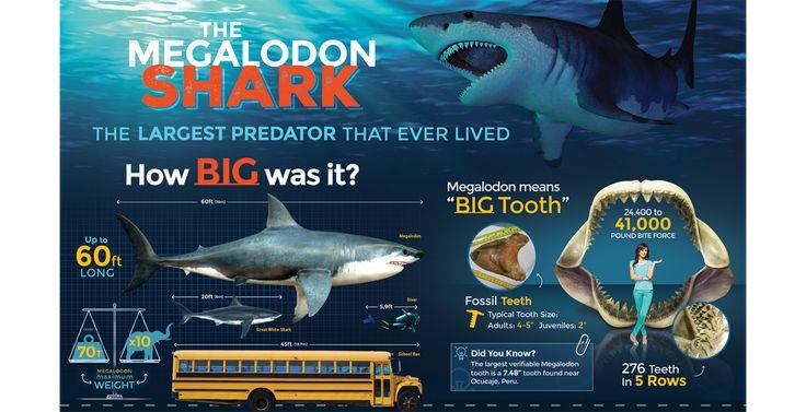 37 best Megalodon images on Pinterest | Sharks, Megalodon shark and Shark