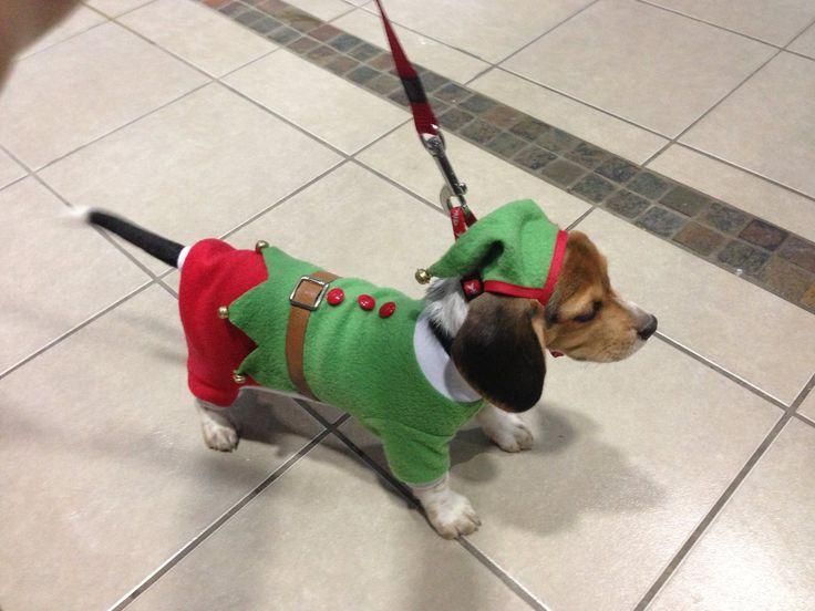 Nos encanta la Navidad, así que también tendremos el disfraz de duende, uno de los más solicitados. Disfraz para perros, ropa para perros. www.toutmignon.net