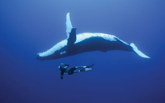 Diving with whales Wallpapers Pictures Photos Images