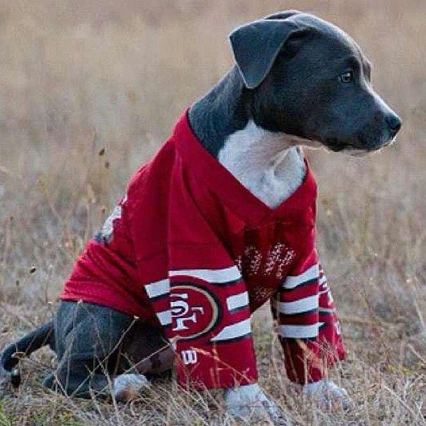 http://www.MyPitbullShop.com #pitbull #pitbulls #instadog #puppy #pup #cute #eyes #instagood #dogs_of_instagram #pet #pets #animal #animals #petstagram #petsagram #dogsitting #photooftheday #dogsofinstagram #ilovemydog #instagramdogs #nature #dogstagram #dogoftheday #lovedogs #lovepuppies #hound #adorable #doglover