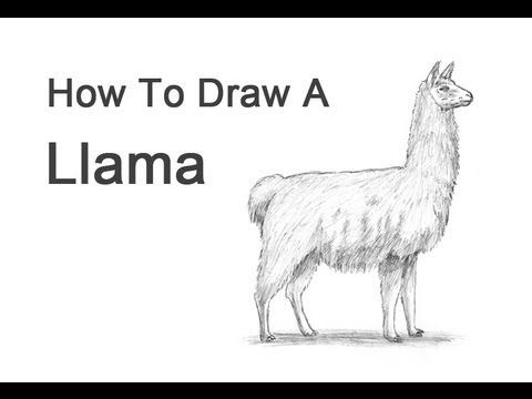 how to draw a llama wikihow