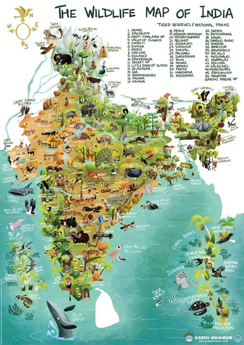 Green Humour: The Wildlife Map of India by Rohan Chakravarty