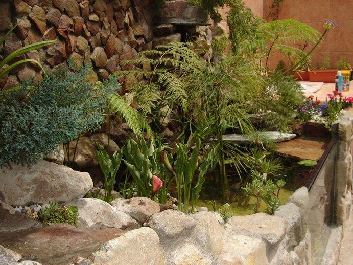M s de 25 ideas incre bles sobre estanque de tortugas en for Como hacer un estanque para peces koi