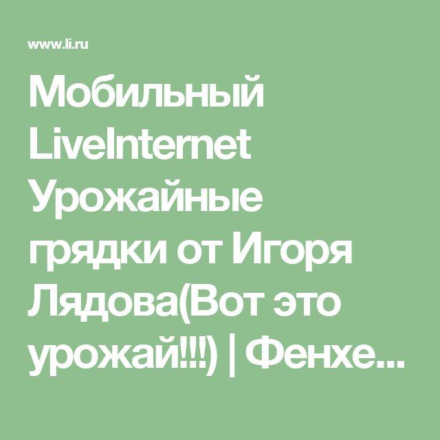 Мобильный LiveInternet Урожайные грядки от Игоря Лядова(Вот это урожай!!!)   Фенхель - Дневник Фенхель  